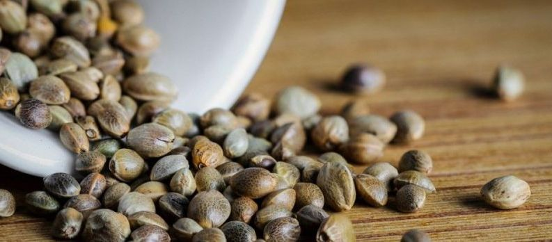 Why is it good to buy seeds on internet than local seller?