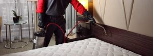 bed bug control services singapore